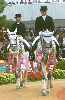 女王杯の誘導馬 4.JPG
