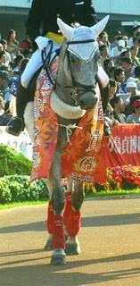秋華賞の誘導馬 3.JPG