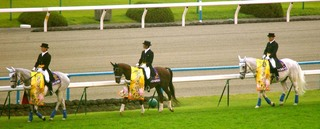菊花賞の誘導馬 2.JPG