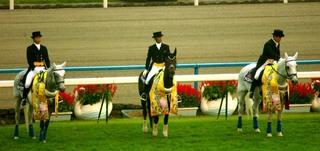 菊花賞の誘導馬 3.JPG