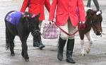 20071111_pony1.jpg