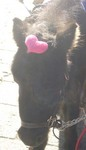 20071122_pony.jpg
