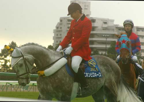 1 月 23 日の誘導馬 7.JPG