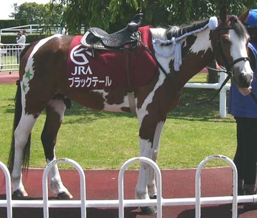 20080601_pony (1).jpg