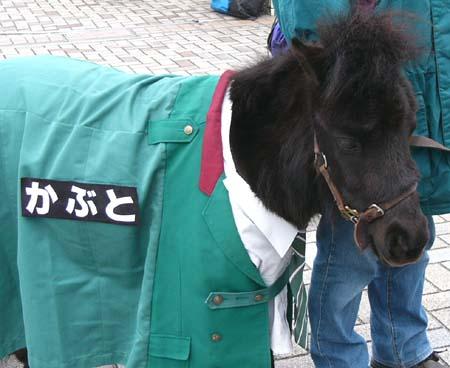 20090117_kabu.JPG