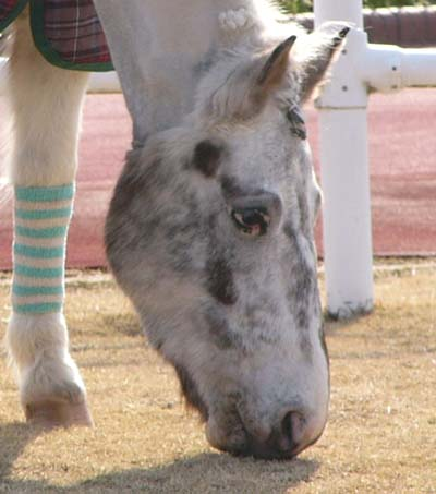 20090117_pony.JPG