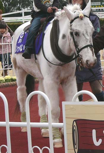 20100214_pony (2).JPG