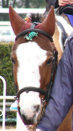 20100214_pony (3).JPG