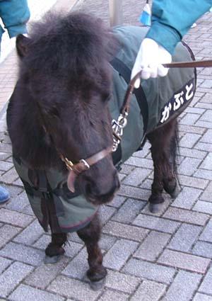 20100214_pony_kabu.JPG
