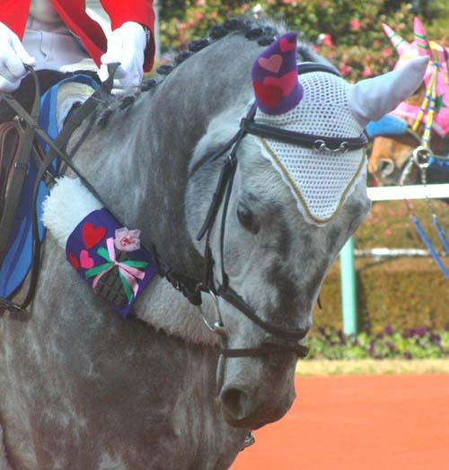 2 月 5 日の誘導馬 2(1R).JPG