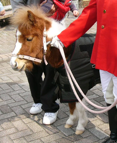 pony (1).JPG