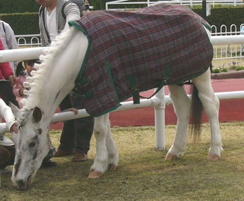 pony (3).JPG