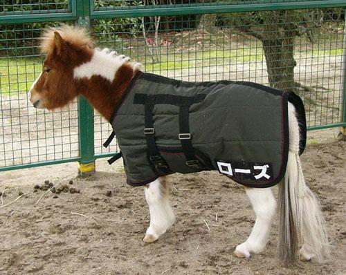 pony (5).JPG