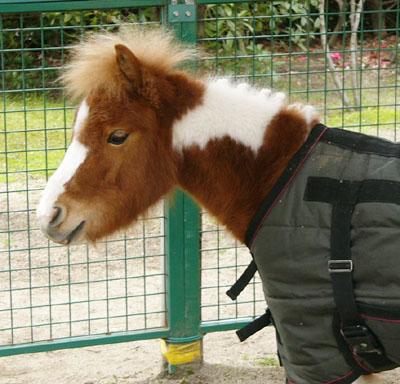 pony (6).JPG
