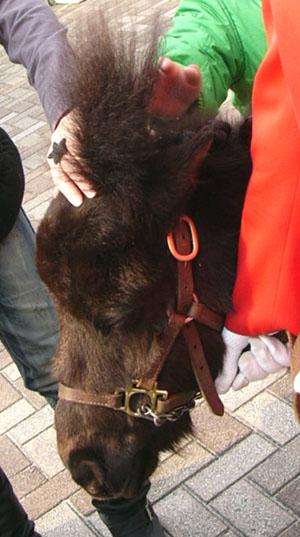 pony (7).JPG