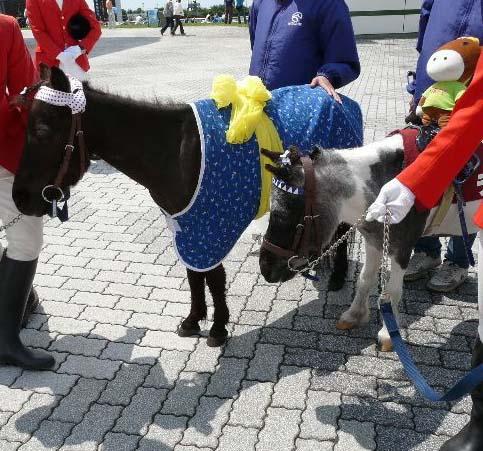 20080712_pony.jpg