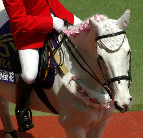 4 月 12 日の誘導馬4.JPG