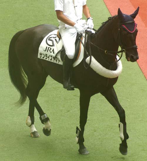 7 月 5 日の誘導馬 2(サンライズヤマト).JPG