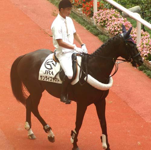7 月 5 日の誘導馬 3(サンライズヤマト).JPG