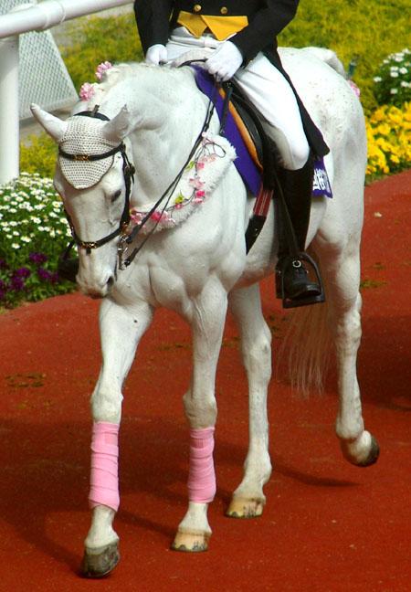 桜花賞の誘導馬 1.JPG