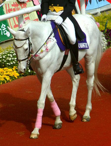 桜花賞の誘導馬 2.JPG