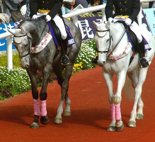 桜花賞の誘導馬 3.JPG