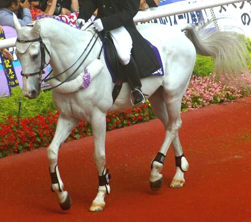 宝塚記念の誘導馬 1.jpg
