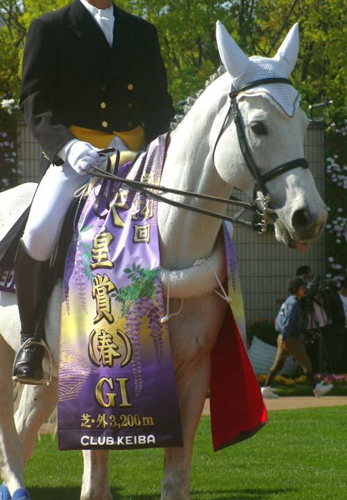天皇賞の誘導馬 3(メイショウシャーク).jpg