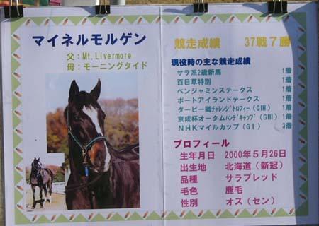20081227_keyaki_mor (1).JPG