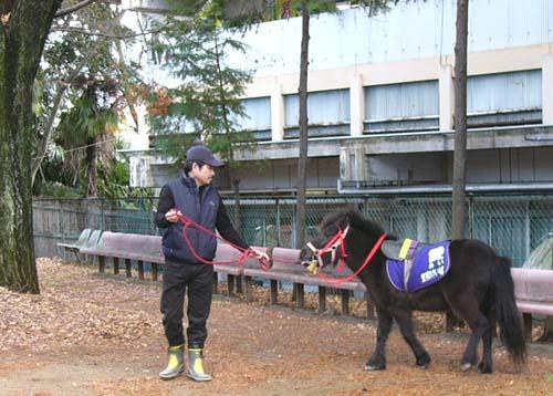 20091228_pony.JPG