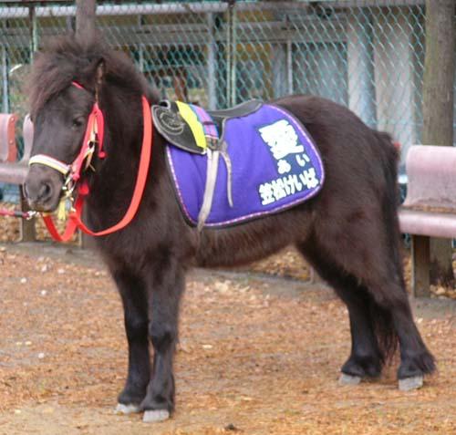 20091228_pony (1).JPG
