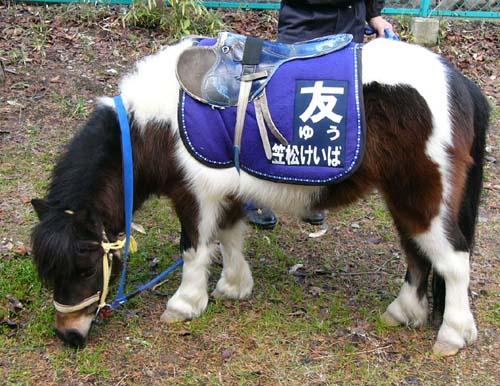 20091228_pony (2).JPG