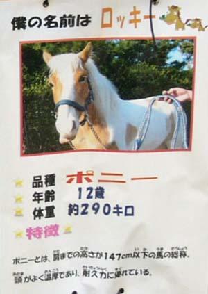20090822_pony (1).JPG