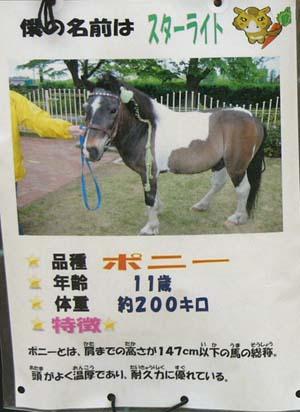 20090822_pony (2).JPG
