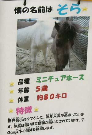 20090822_pony (3).JPG