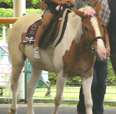 20090822_pony (4).JPG