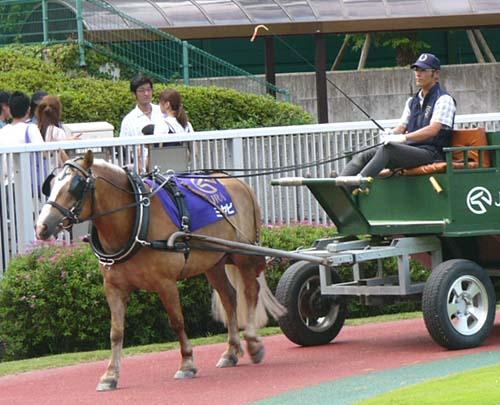 20090822_pony (5).JPG