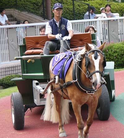 20090822_pony (6).JPG