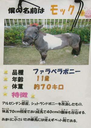 20090822_pony (7).JPG