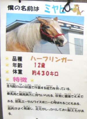 20090822_pony (8).jpg