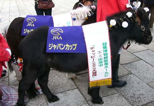 20091130_pony (1).JPG