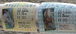 20091130_pony (11).JPG