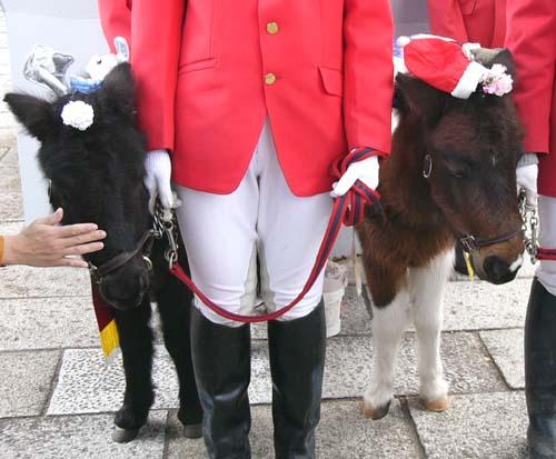 20091130_pony (2).JPG