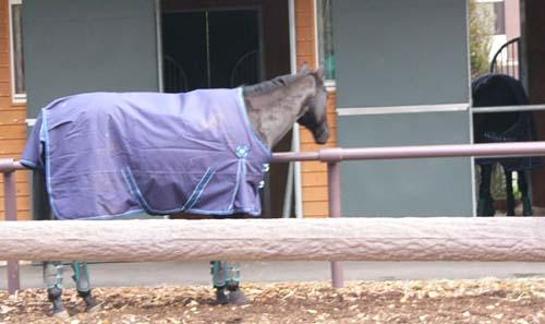 20091130_pony (3).JPG