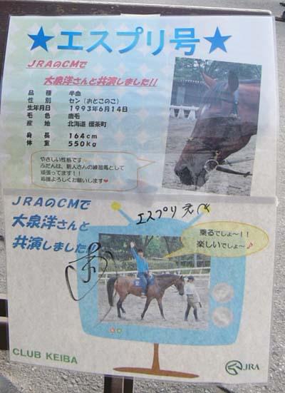 20091130_pony (5).JPG