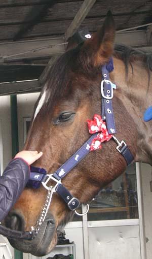 20091130_pony (6).JPG