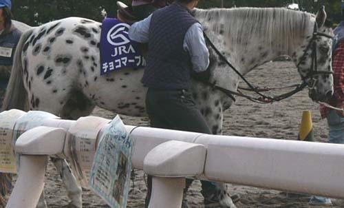 20091130_pony (7).JPG