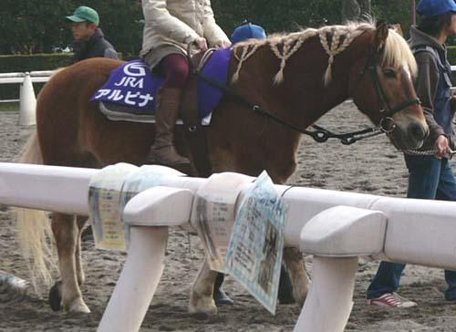 20091130_pony (8).JPG