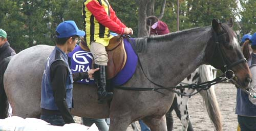 20091130_pony (9).JPG