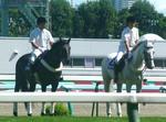 ショウナンターボとフサイチピアレス 1.JPG